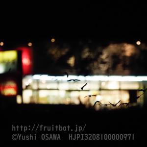 お店の灯りを背景に飛ぶアブラコウモリ