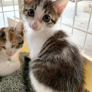 【里親募集します】母猫が子猫3匹とやってきたの巻