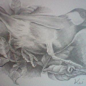 ★★鉛筆画 「桜文鳥」& 今日は愛妻の日