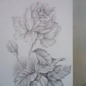 ★★ 鉛筆画「冬の薔薇」
