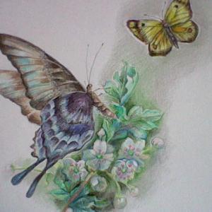 ★★鉛筆画「Butterfly」昔どんな習い事を習ってたか教えて!