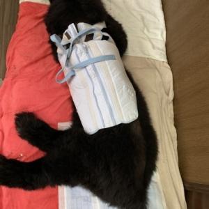 寝たきり生活・介護生活