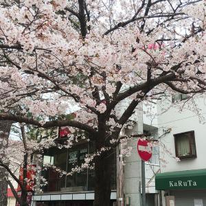 宝塚散歩は春爛漫