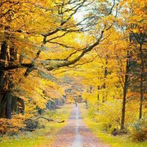 ブラームスは、秋の季語