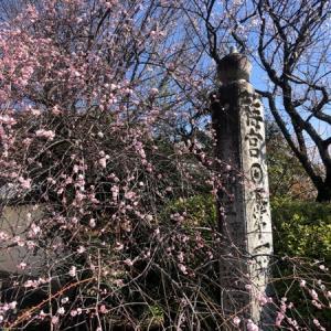 嵐山、猫神社とも云われる梅宮大社 と 【 2月備忘録  】