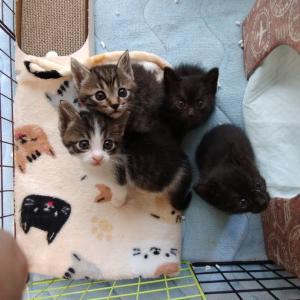 子猫の近況