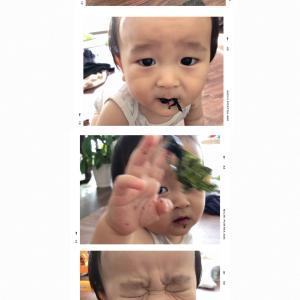 海苔との格闘<赤ちゃんとの日常を撮る>