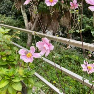 10月の庭。。。その1