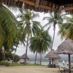 セブ島でダイブサファリに参加したい!