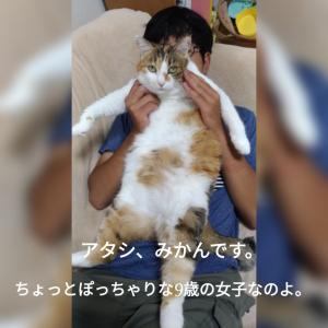 うちの猫。みかんです。