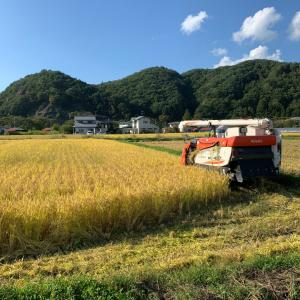 稲刈り開始❗️