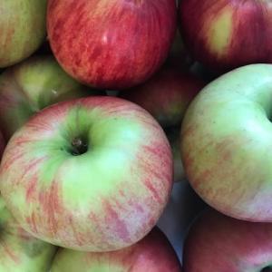 山﨑リンゴ