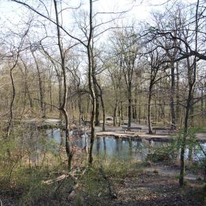 鴨の住む池