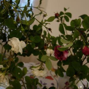 野趣に富む薔薇