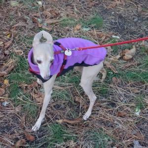 紫のお散歩服