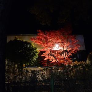 月夜とコロナと空き巣