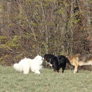 森で出会った犬たち