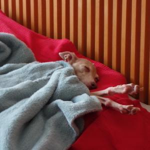 ヌビー、寝姿