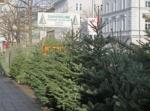 クリスマスツリーの販売が始まりました