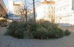 クリスマスツリー回収、最終日のドタバタ劇