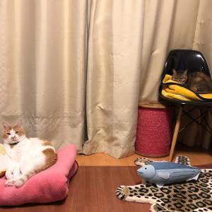 猫団子は叶わぬ夢