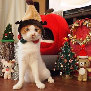ラストクリスマスって何にゃの?