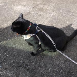 黒猫の不思議な魔力・・・