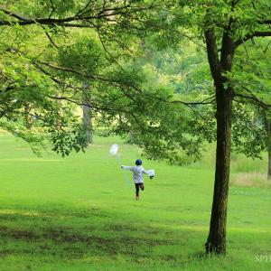 久しぶりの各務野自然遺産の森