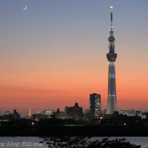 スカイツリーと東京タワー