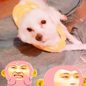 ~ホテル犬~ソラちゃん