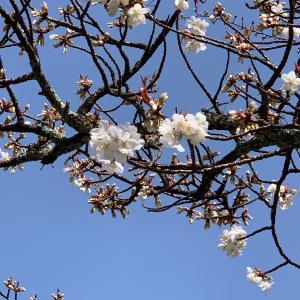 それでも春は来る。