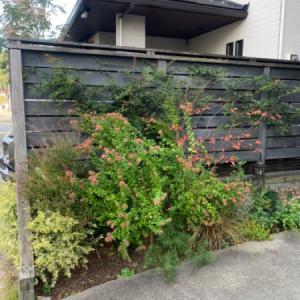 植栽リニューアルと土壌改良