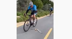 鳥さん ロードバイク軍団と一緒に飛ぶの巻