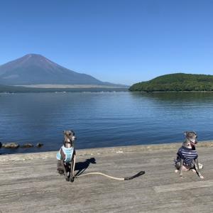 イタグレと富士山