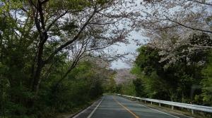4/3 春のお花見釣行会で辨屋さん