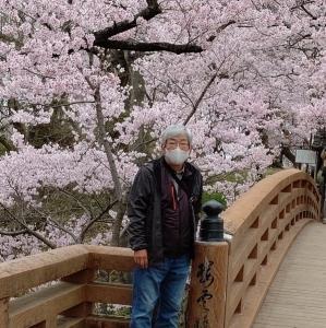 4/4 高遠城址公園のお花見!!