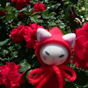 赤いバラと、お別れの話