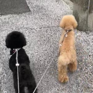 怖すぎたお散歩の巻