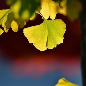 秋の色・・・・・