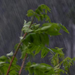 激しく、雨・・
