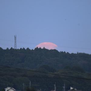 昇る月・・・
