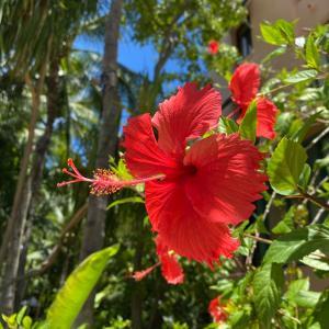 ハワイの夏