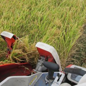 アサヒ米とヒノヒカリの収穫