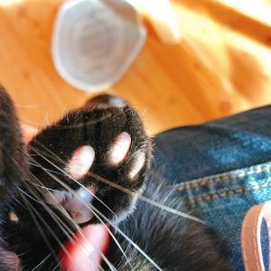 滋賀・高島へしこツアーその5  黒猫のクロ