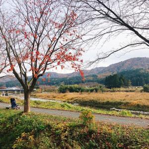 滋賀・高島へしこツアーその10 畑の棚田