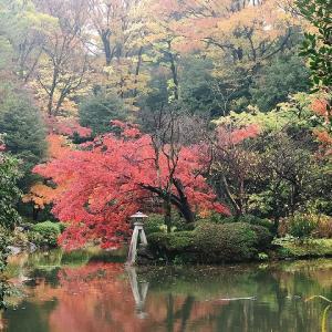 有栖川公園も、紅葉してました☆