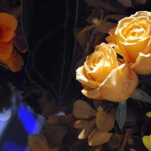 黄色の薔薇の歴史は浅かった・・・