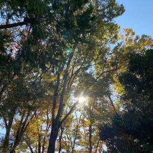 秋を感じる季節