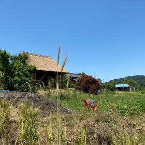 畑を耕さない自然農法@小川町