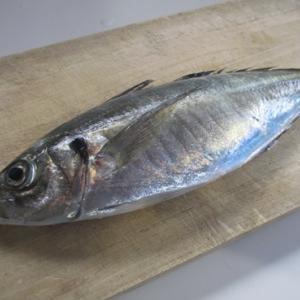 マアジという魚